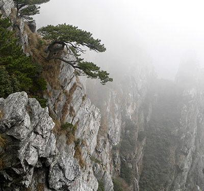 montagne_lu_thé_Lu_Shan_Yun_Wu